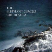 elephant-circus